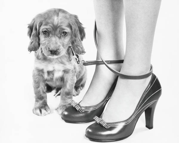 Cocker Spaniel Photograph - Legs Of Woman In High Heel Shoes by H. Armstrong Roberts