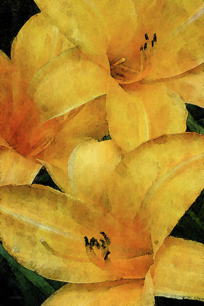 Photograph - Lemon Orange 3704 Idp_2 by Steven Ward