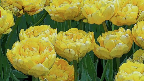 Photograph - Lemony Yellow Tulips by Kathi Mirto