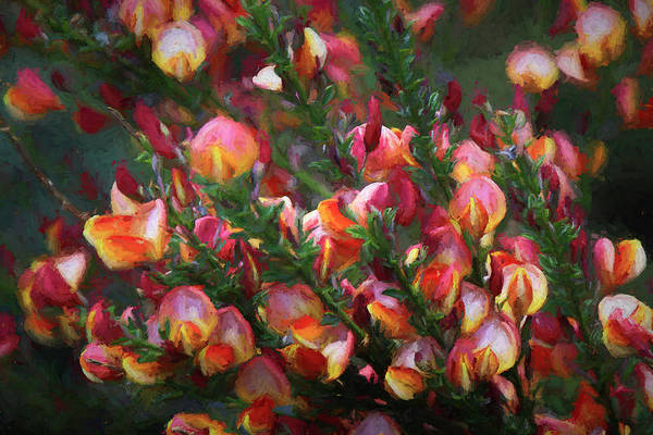 Wall Art - Photograph - Lena Scotch Broom - Painterly by Donna Kennedy