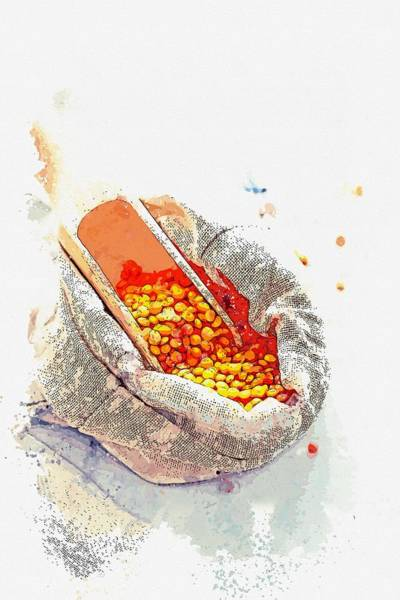 Protein Painting - Lentils -  Watercolor By Ahmet Asar by Celestial Images