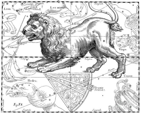 Wall Art - Drawing - Leo, The Zodiacal Constellation Of The Lion by Johann Hevelius