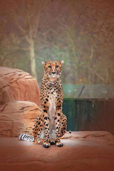 Photograph - Leopard  by Gouzel -