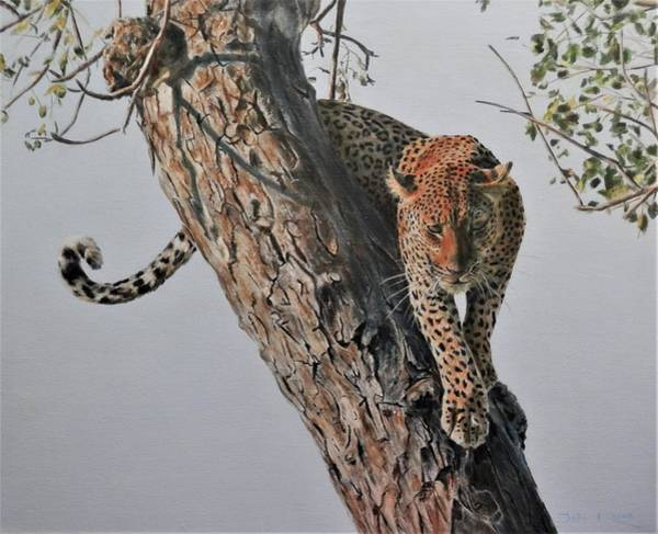 Painting - Leopard In Tree by John Neeve