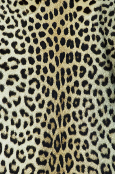 Cowhide Wall Art - Photograph - Leopard Skinhide by Herkisi