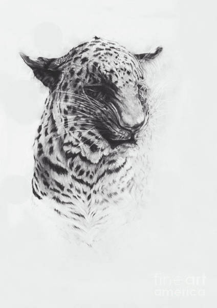 Crayon Drawing - Leopard Two by Odile Kidd