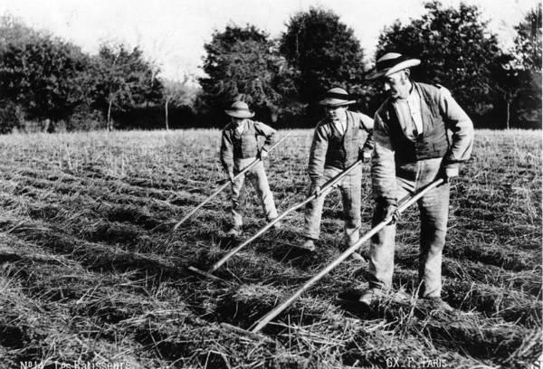 Hay Rake Photograph - Les Ratisseurs by Hulton Archive