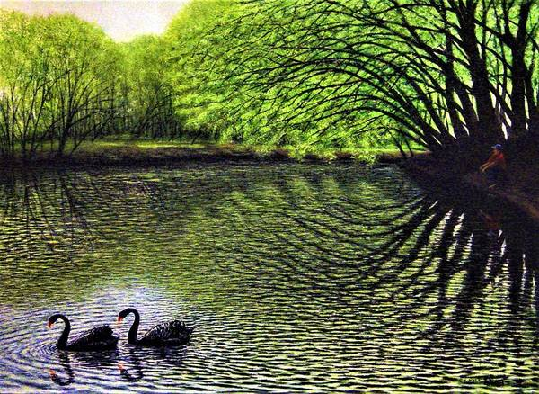 Wall Art - Painting - Lester's Swans by Charles Hill