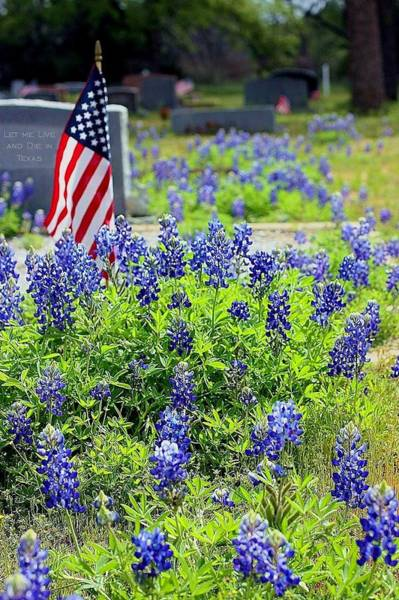 Texas Bluebonnet Digital Art - Let Me Live And Die In Texas by Ellen O'Reilly