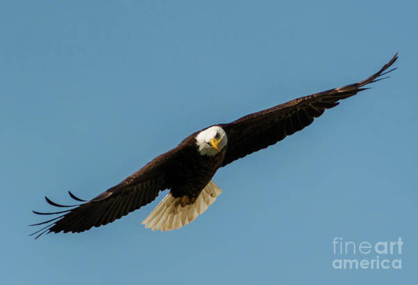 Wall Art - Photograph - Lethal Stare by Mike Dawson