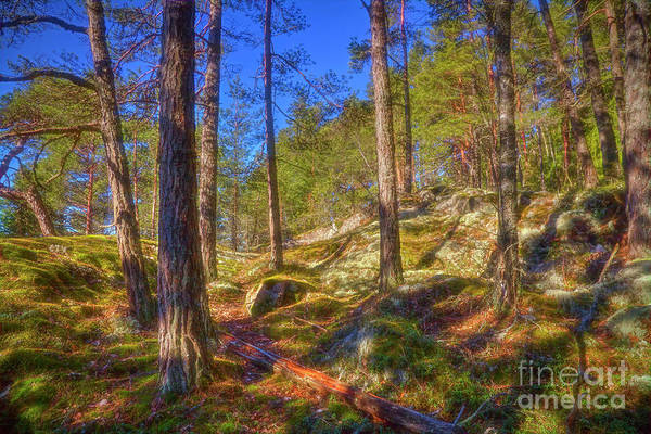 Wall Art - Photograph - Let's Go To The Woods by Veikko Suikkanen