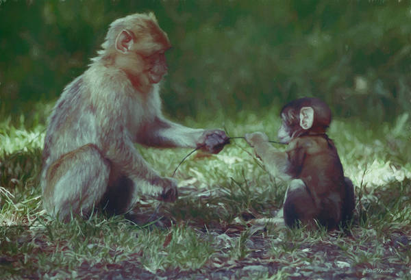 Painting - Lets Share - Barbary Macaque - Painting by Ericamaxine Price