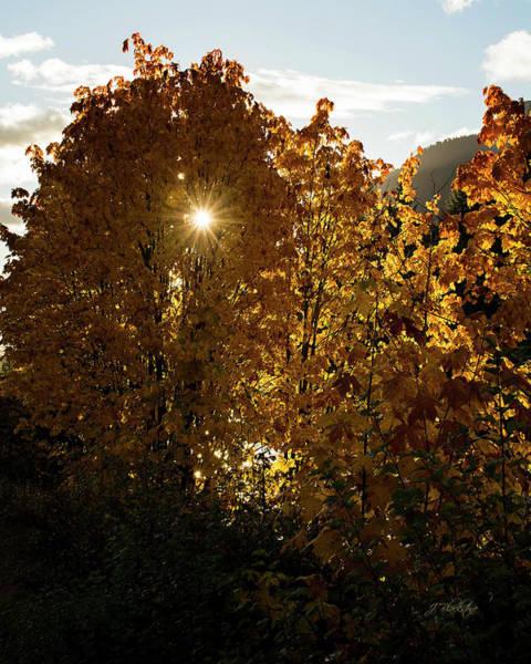 Photograph - Letting Go - Autumn Art by Jordan Blackstone