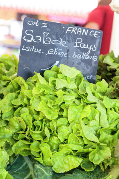Wall Art - Photograph - Lettuce In Outdoor Market, Nice, Cote by Lisa S. Engelbrecht