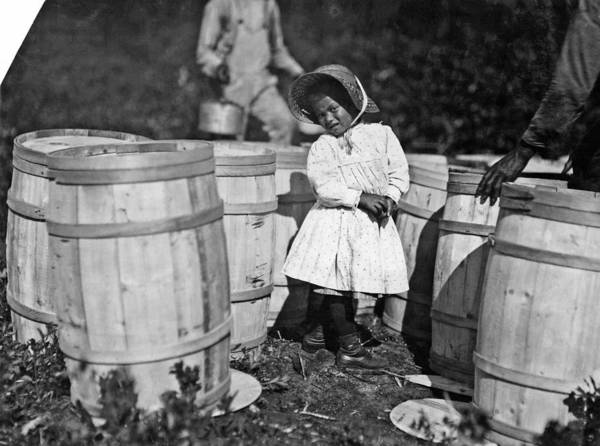 Painting - Lewis Hine - Mary Christmas, Nearly 4 Years Old. Picks Cranberries Sometimes. She Is Now Picking Up  by Celestial Images