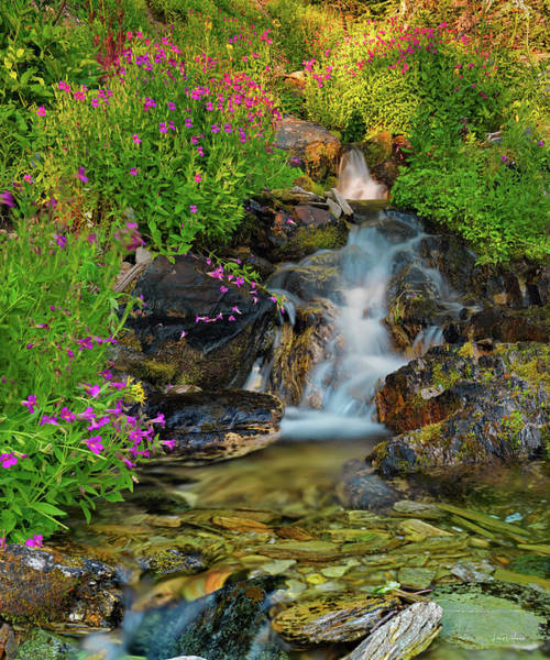 High Quality Photograph - Lewis Monkey Flowers And Cascade by Leland D Howard