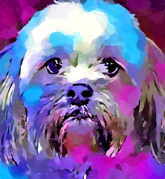 Wall Art - Painting - Lhasa Apso 2 by Chris Butler