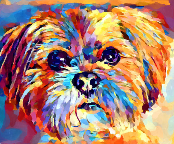 Wall Art - Painting - Lhasa Apso 3 by Chris Butler
