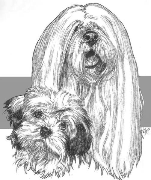 Drawing - Lhasa Apso And Pup by Barbara Keith