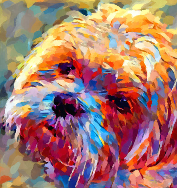 Wall Art - Painting - Lhasa Apso by Chris Butler