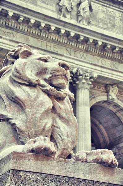 Photograph - Library Guardian by JAMART Photography