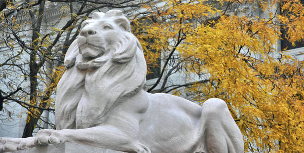 Photograph - Library Lion by JAMART Photography
