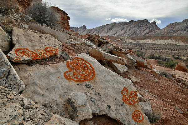 Photograph - Lichen Art Along County Road 1028 In Utah by Ray Mathis