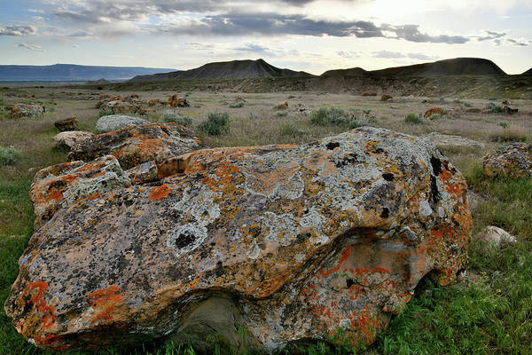 Photograph - Lichen Covered Boulder In Book Cliffs Desert by Ray Mathis