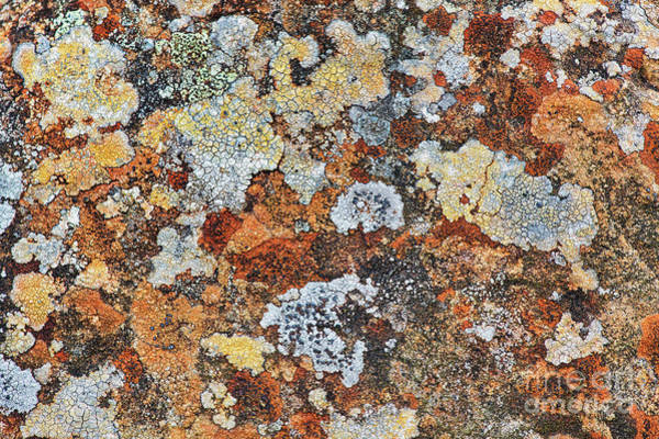 Weathering Photograph - Lichen On Rock by Tim Gainey