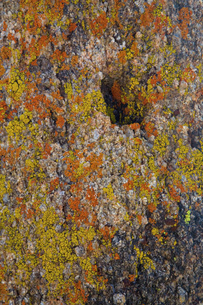 Orange Lichen Photograph - Lichen On Rocks In Alabama Hills by Darrell Gulin