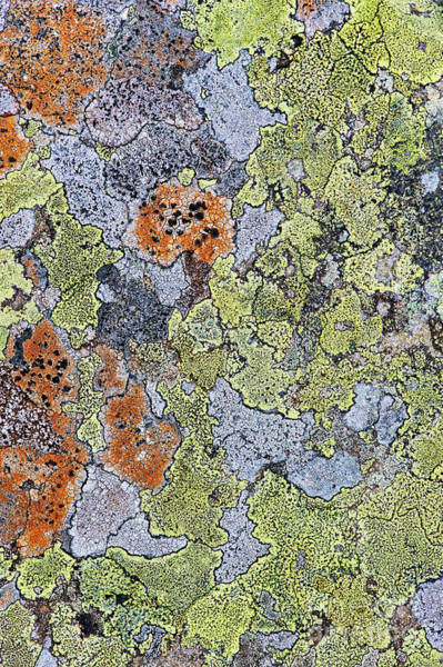 Weathering Photograph - Lichen On Stone by Tim Gainey