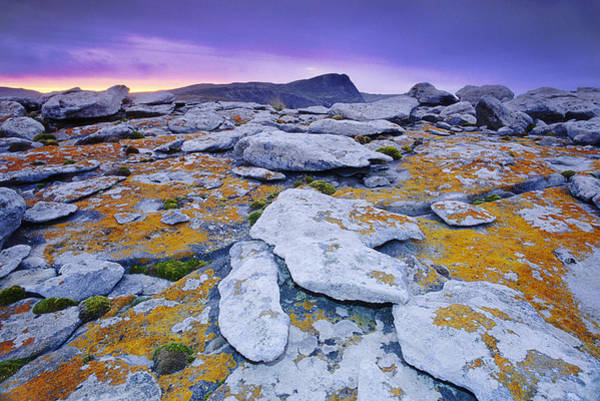 Wall Art - Photograph - Lichen On The Rocks In The Landscape by Mint Images