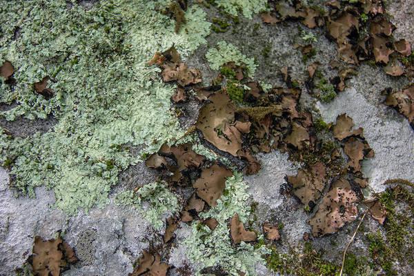 Wall Art - Photograph - Lichen Textures by Teresa Mucha