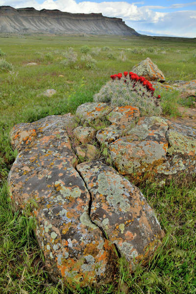 Photograph - Lichens And Cacti Bloom At Book Cliffs by Ray Mathis