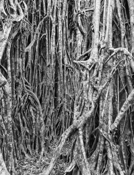 Atherton Tablelands Photograph - Life After Death 1 Monotone by Kim Wilder Hinson