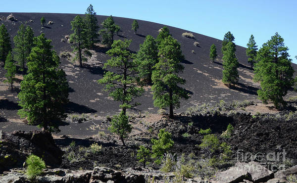Wall Art - Photograph - Life And Shadows On The Ancient Volcano by Debby Pueschel