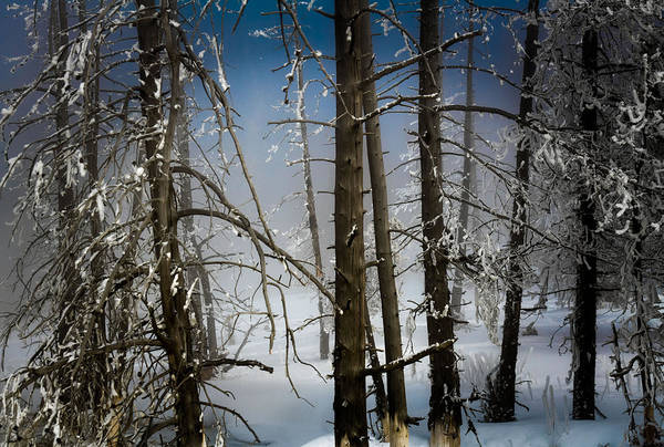 Photograph - Life Found In A Bygone Forest by Karen Wiles