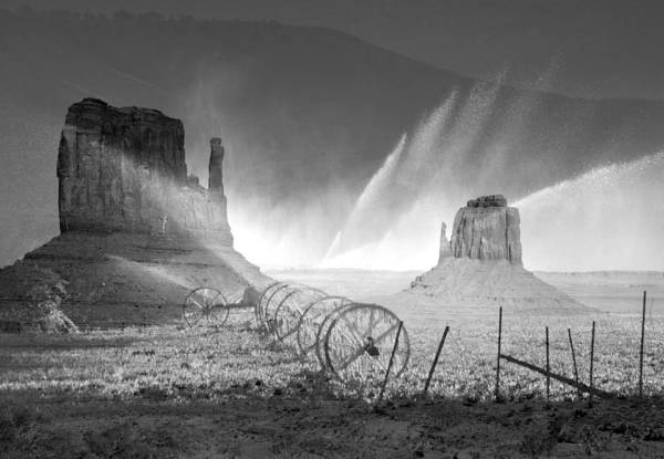 Wall Art - Photograph - Life In The Desert by David Lee Thompson
