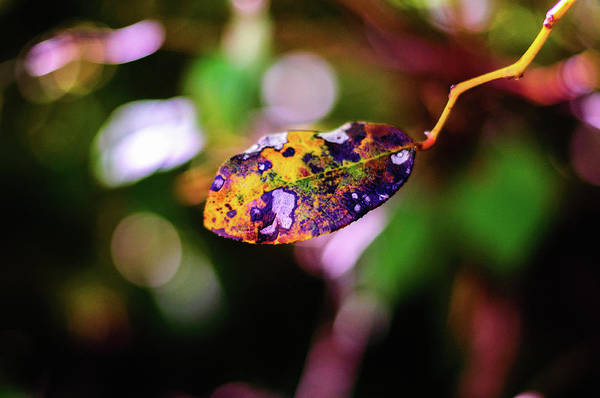 Photograph - Life Of A Leaf by Tikvah's Hope