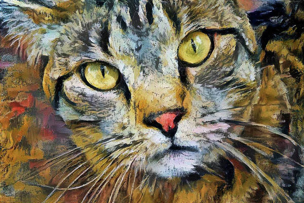 Digital Art - Life Of Riley The Tabby Cat by Peggy Collins