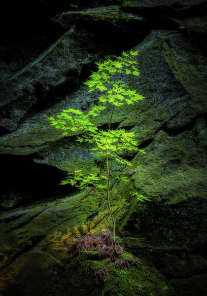 Moss Green Photograph - Life Will Find A Way by Tom Mc Nemar