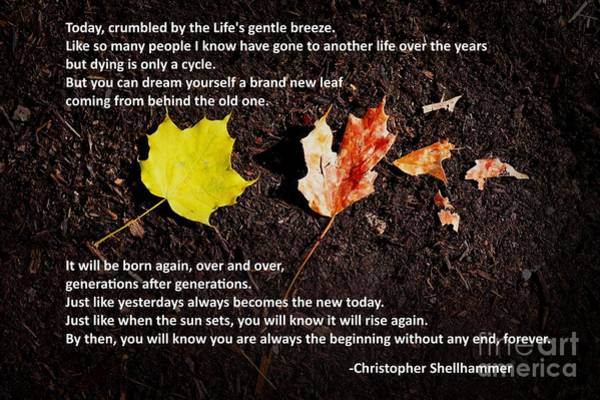 Photograph - Life's Cycle by Christopher Shellhammer