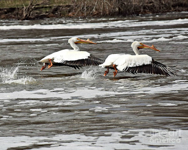Wall Art - Photograph - Lift Off by Kathy M Krause