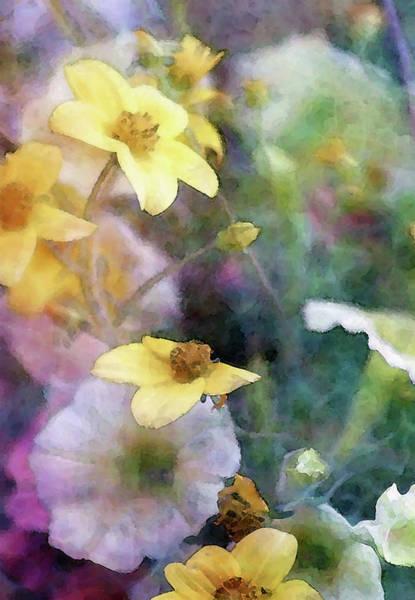Photograph - Light Blossoms 6592 Idp_2 by Steven Ward