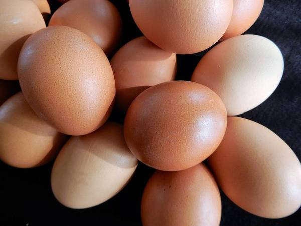 Photograph - Light Brown Eggs by Tina M Wenger
