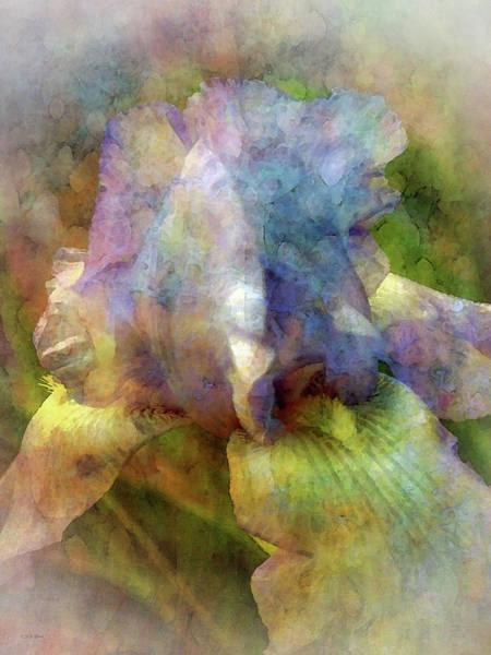 Photograph - Light Iris 0556 Idp_2 by Steven Ward