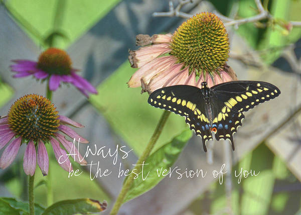 Photograph - Light Landing Quote by Jamart Photography