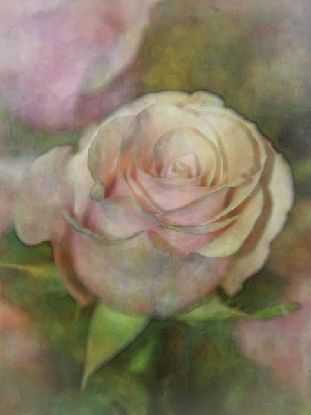 Photograph - Light Pink 7437 Idp_2 by Steven Ward