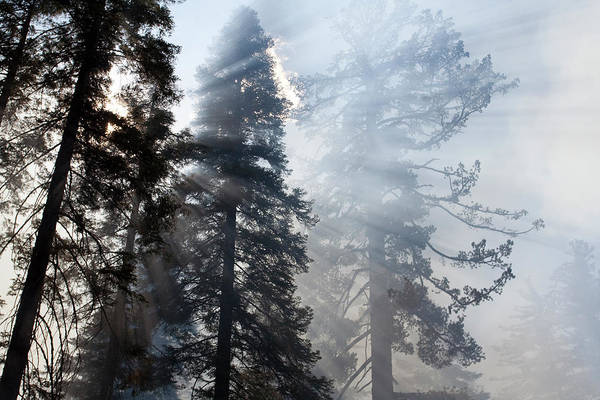 Sequoia Grove Photograph - Light Rays Through Smoke And Trees by Christina Magill