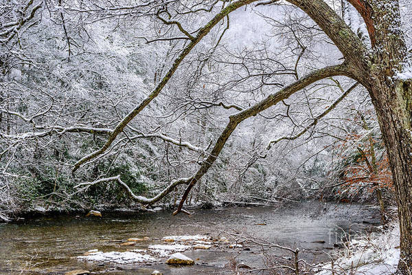 Photograph - Light Snow On Cranberry River by Thomas R Fletcher